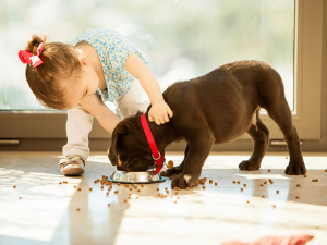 How to Keep a Clean Home with Pets
